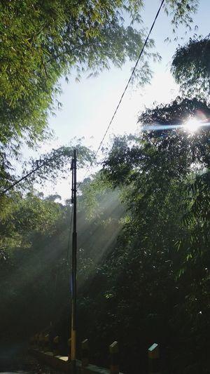 spotlight Tree