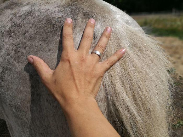 horsetail and human hand Horse Horse Tail White Horse White Country Countryside Farm Farm Life Farmland Human Hand Ring Close-up Wedding Ring Human Finger