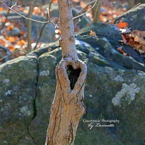 "Collection - "" For the Love of Nature "" Hearts Trees Hiking Appalachiantrail Vernonnj"