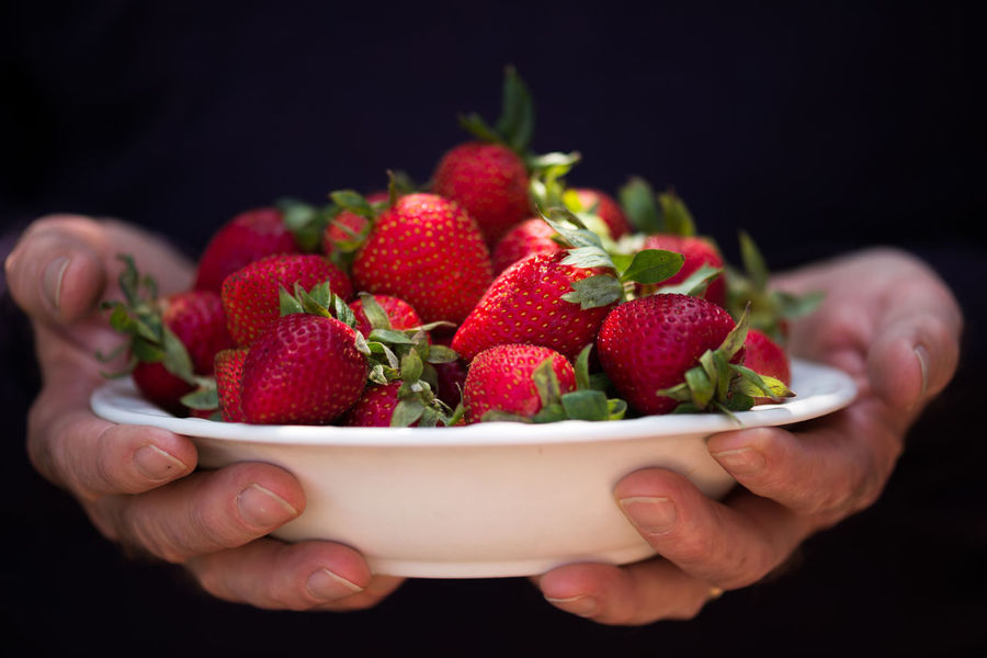 Hands holding a bowl of strawberries Bowl Of Fruit Close-up Cropped Food Freshness Fruit Hands Hands Holding Food Health Food Healthy Eating Healthy Food Holding Indulgence Lifestyles Organic Part Of Person Red Ripe Strawberries Strawberry Studio Shot Summer Summer Fruit