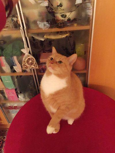 Katzenfotografie Cats Of EyeEm 3XSPUnity Cat Thinking Cat Trick 😻my Sweety Cat😻 😸😸😸😸lol 🐱 Cats Posing