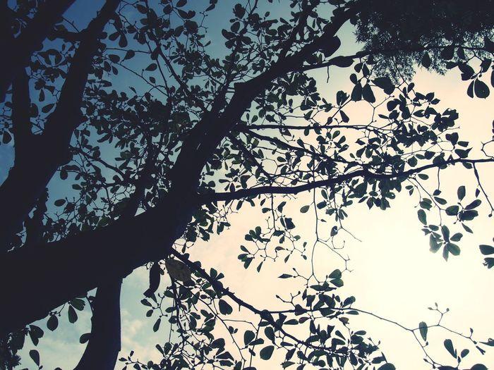 Olympus Trees Bruce Chan