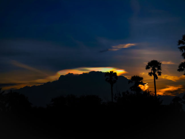 Tree irisSilhouette Dramatic Sky Sunset Cloud - Sky Palm Tree Landscape Tree Area Pinaceae Outdoors Beauty In Nature No People Blue Tree Trunk Nature Shadow Night Star - Space Sky Scenics