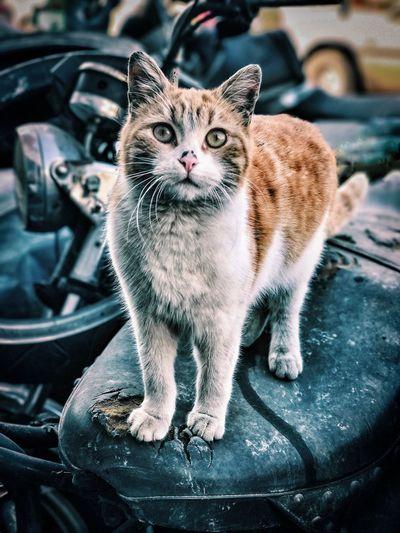 Portrait of cat sitting on vehicle seat
