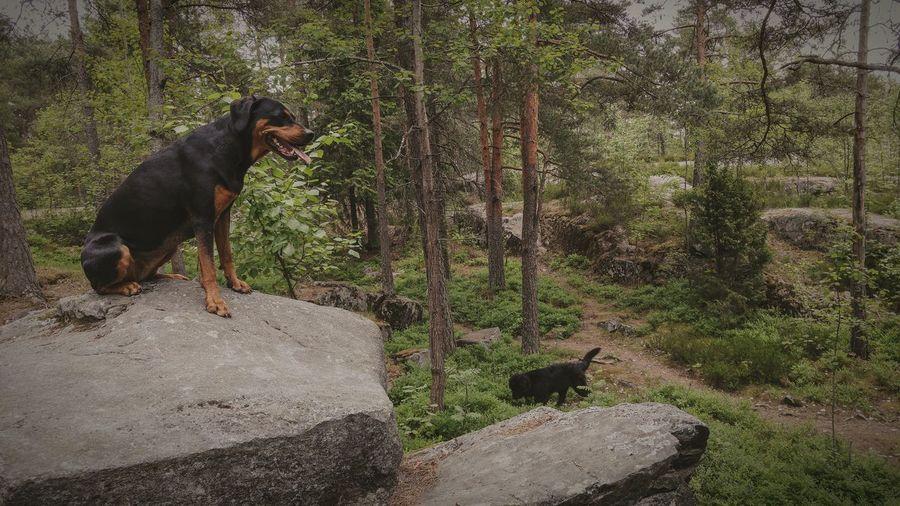 Metsässä onpi hyvä olla ©️JaniVauhkonen Dog Pets Domestic Animals One Animal Animal Themes Mammal No People Outdoors Day Tree Nature Water JaniVauhkonen LGG4