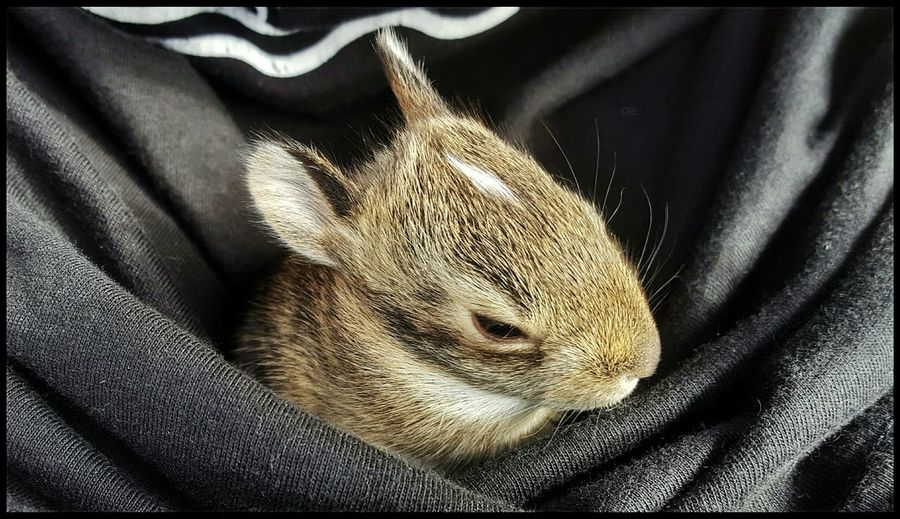 Nature tucked in my pocket, I am the Bunny Whisperer🐇😂 Just my daily check on them, they opened their eyes. Pulled a tick off one *shudders so gross Happy Easter Sunday Morning Baby Bunny One Animal Animal Themes Animal Wildlife Animals In The Wild Leopard 👈😂 Nice one ee Bunny Struggle Springtime Wildlife & Nature Love Nature