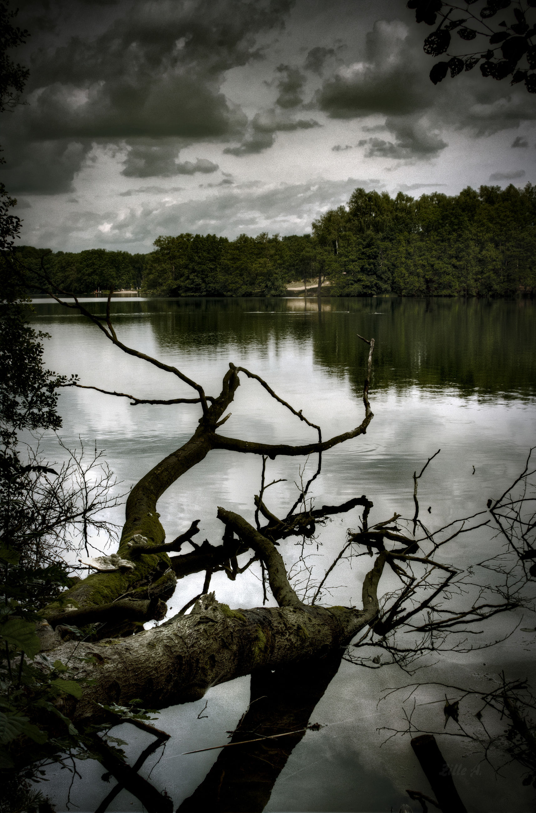 tree, nature, lake, reflection, water, beauty in nature, cloud - sky, no people, tranquil scene, tranquility, sky, outdoors, day, growth, scenics, plant, forest, landscape, grass, dead tree