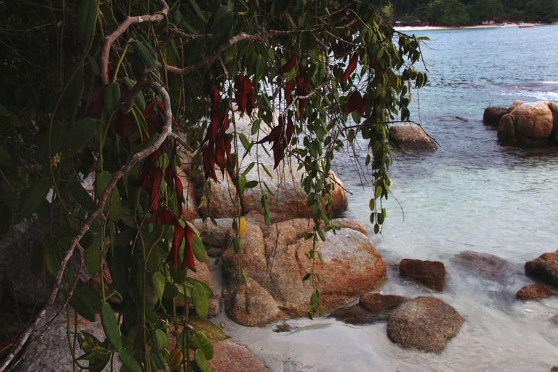 Beach Rocks Lagoon Ocean Green Leaves Foreground in Pangkor Malaysia South East Asia