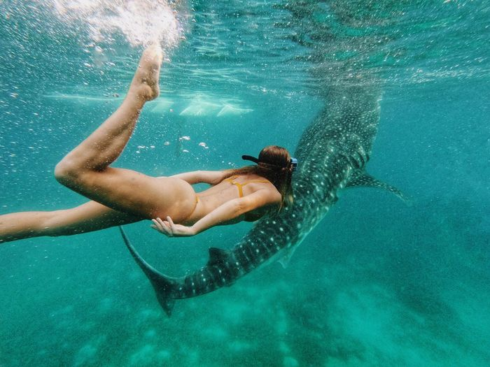 With whale sharks Philippines Cebu Oslob Whale Shark Water Sea One Person Underwater Clothing Adult Swimming Pool Swimwear Women Nature Swimming Leisure Activity Turquoise Colored Adventures In The City Be Brave