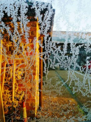 Jack Frost part II Jack Frost Frost Frosty Mornings Car Window Close-up
