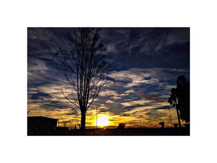 photosgraphie Essaouira Architecture Bare Tree Building Exterior City Day Nature No People Outdoors Photography Themes Silhouette Sky Sunset Tree First Eyeem Photo