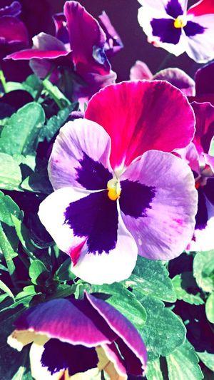 Flowers OpenEdit Sun EyeEm Nature Lover