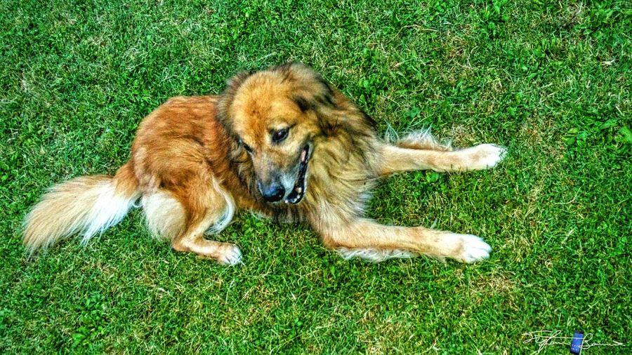 Showcase April Spring Dog Pippo Animal_collection Animal Love Z3 Xperia