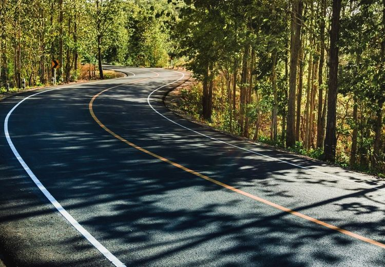 Tree Plant Direction Road Nature The Way Forward Transportation Sunlight Outdoors Forest Curve Road Marking Shadow Tranquility No People Stay Out