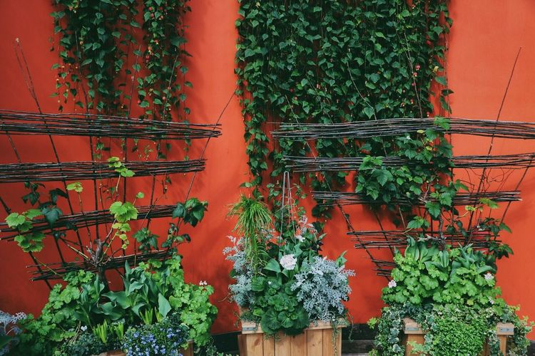 Moody Colour Blocking- Of urban nature and colours Growth Plant Potted Plant Green Color No People Outdoors Ivy Tree Nature Day Leaf Architecture Freshness Greenhouse Singapore EyeEmNewHere