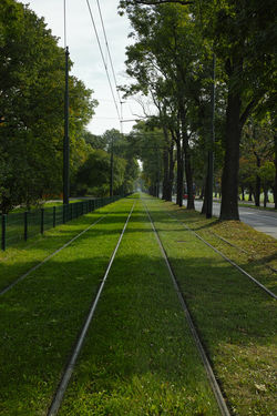 Green tracks Tree Grass Green Color Outdoors Tracks Day Vivid Colours