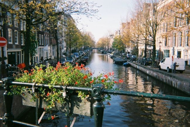 Amsterdam Thenetherlands Holland Trip Flowers アムステルダム オランダ 海外旅行 フィルム 写ルンです Film Film Photography Enjoying Life Hello World