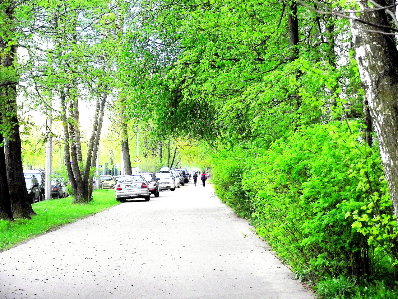 tree, car, transportation, nature, growth, green color, road, forest, mode of transport, land vehicle, outdoors, the way forward, scenics, day, beauty in nature, people
