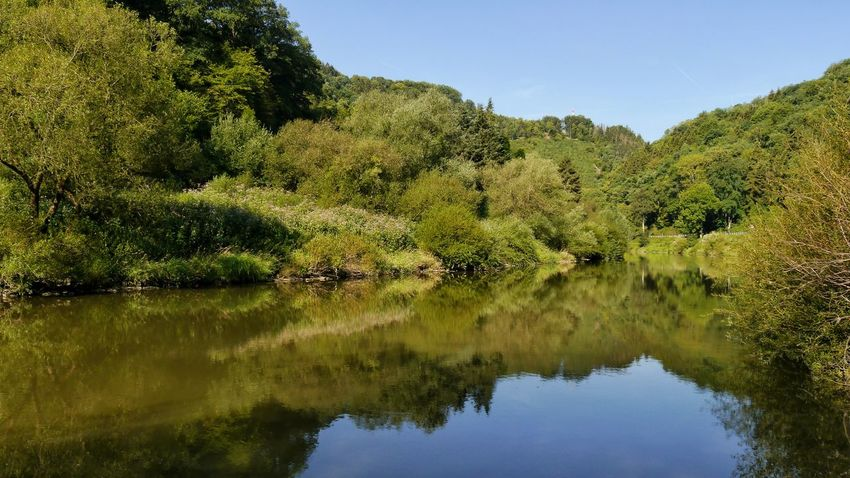 reflections of forest in Lahn river Lahn River Rivershore Reflections In The Water Mountain With Trees Blue Sky EyeEm Nature Lover EyeEm Gallery Landscape_photography Tree Water Lake Reflection Sky Calm Tranquil Scene Tranquility Countryside Reflection Lake Idyllic Shore Scenics Non-urban Scene