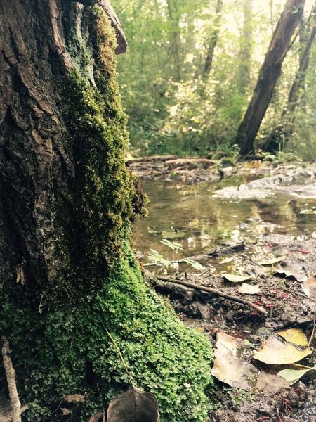 Premium Wanderweg Tree Trunk Forest Tree Tranquility Tranquil Scene Water Non-urban Scene Stream Scenics Nature WoodLand Fallen Tree Green Color Moss Growth Environment Beauty In Nature Travel Destinations Tourism Remote Full Frame Outdoors Focus On Foreground Wilderness Botany