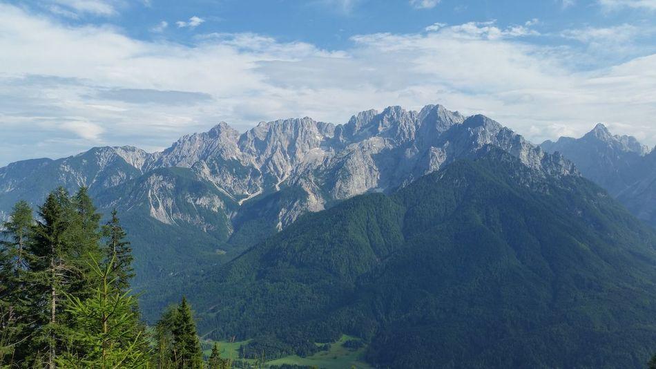 Mountain Range EyeEm Selects Tree Mountain Forest Pine Tree Pinaceae Blue Mountain Peak Tree Area