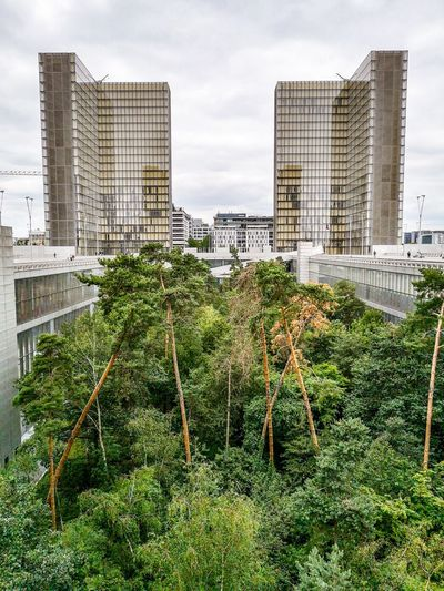 Trees and modern buildings in city against sky