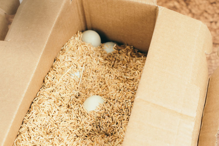 High angle view of eggs with sawdust in cardboard box