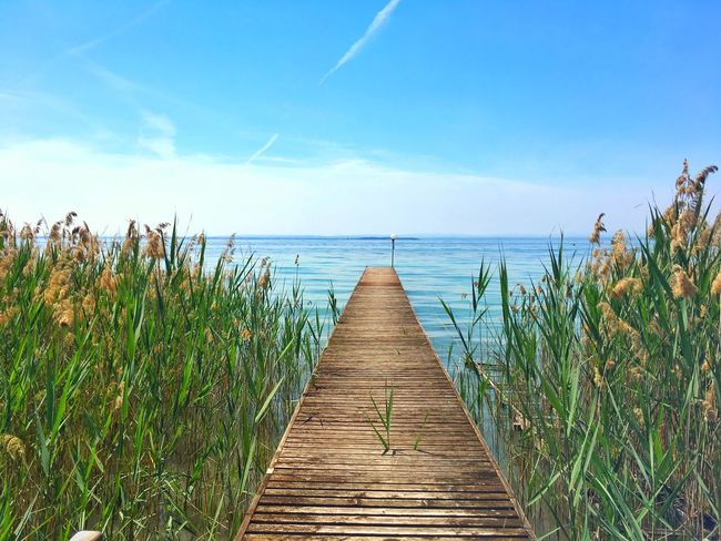 Sea Horizon Over Water Nature Tranquil Scene Water Tranquility Sky Scenics Beauty In Nature Outdoors Growth Day Beach Wood - Material Blue No People Grass Wood Paneling lake