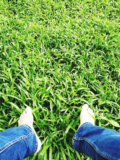 光着脚 脚 绿色 草原 大自然 Jeans Green Color Day Outdoors Men Nature People Nature Outside