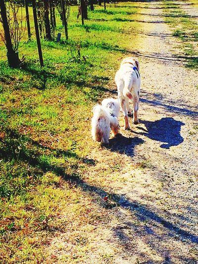 Summer Dogs Followme Dogs Mylove Maltese Maltese Dog City Park Blackandwhite Photography Girovagando