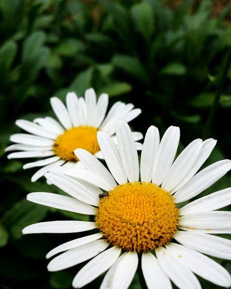 Do jardim Jardimsecreto Tinny Plant Caminhadafotografica