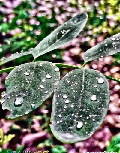 Leaf Wet Drop Water Season  Weather Close-up Rain Growth Leaf Vein Plant Freshness Nature RainDrop Dew Leaves Selective Focus Fragility Beauty In Nature