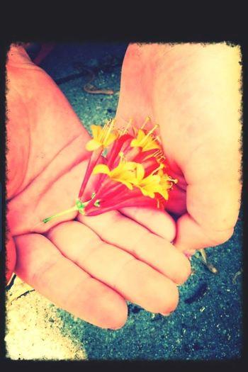 Flower In My Hands