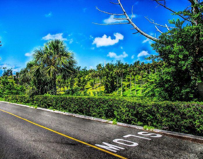 Bermuda - January 2017 Golf Colors Stop Bermuda Tree Sky Road Day Cloud - Sky Green Color Growth