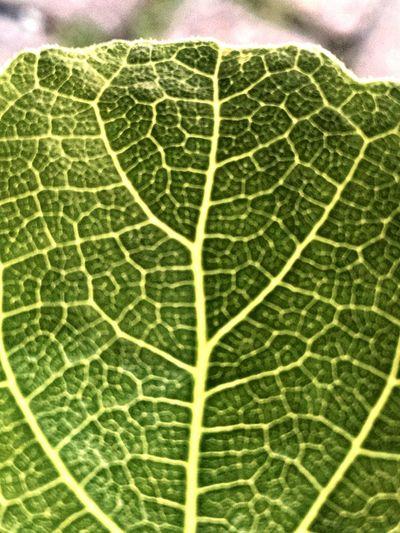 EyeEm Best Shots Garden Photography Showcase April Leaf Nervatures Patterns & Textures