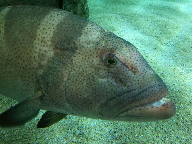 UnderSea Sea Life Underwater Close-up