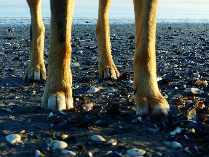 Low Section Beach Sand Animal Leg Outdoors One Animal Animal Themes Sea Day Nature Mammal Dog Doglover Bestfriend Domestic Animals Close-up Selective Focus EyeEm Best Shots - Nature Ocean Ocean Beach Oceanside Seashells Winter Sunset Water