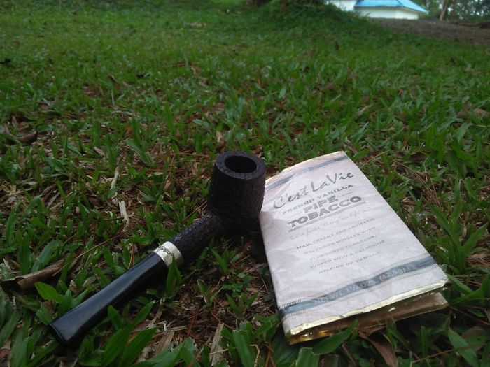 Nice smoke Outdoors Freshness Day Grass Beauty In Nature Green Color Oppo A37 Looking At Camera Real People