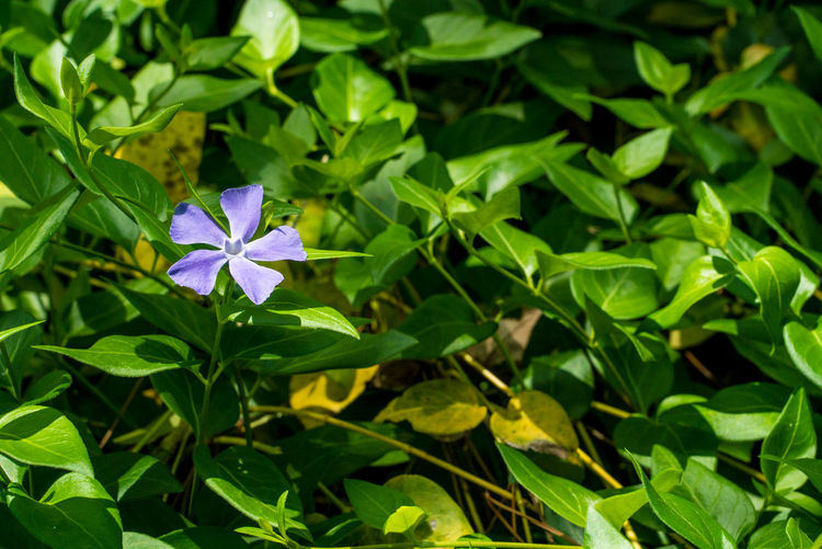Streetphotography Nature Plant Leaf Plant Part Growth Flower Vulnerability  Fragility Flowering Plant Freshness Beauty In Nature Petal Green Color Close-up Flower Head Inflorescence Day No People High Angle View Blue Purple Little Life Lover Flower Collection