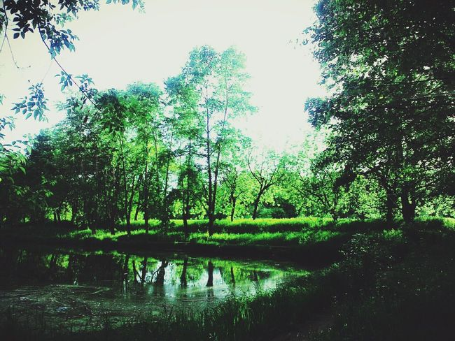 Nope NOthIng Nature ♥ Kek Preety My Life Summer Live Is Beautiful
