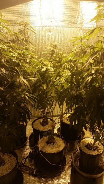 I love Michigan♡ Marijuana Weed Chemdog Nature