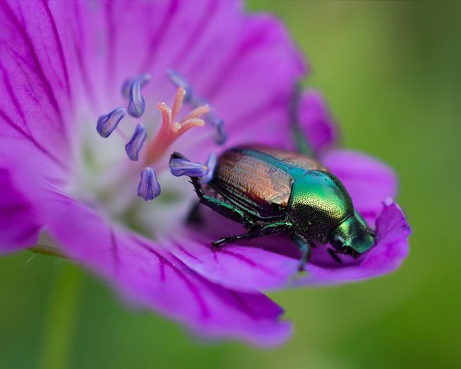 Macro shot of Insects  on Flowers Check This Out