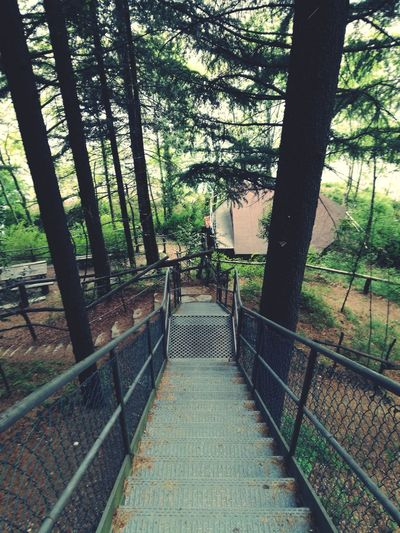 Tree Railing Day Outdoors Footbridge Nature No People Architecture Beauty In Nature Green Italy Italia Travel Destinations Nature Beauty In Nature Urban Tranquil Scene