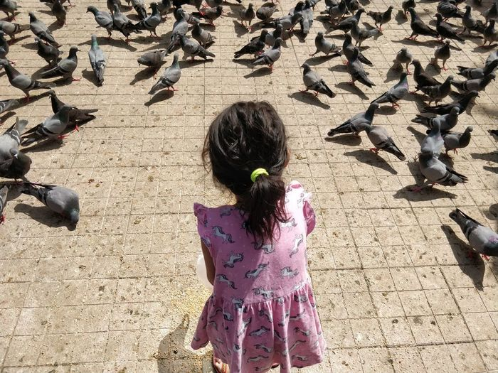 High angle view of girl and birds