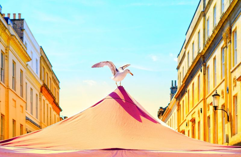 Low Angle View Of Bird Perching On Tent In City Against Sky During Sunny Day