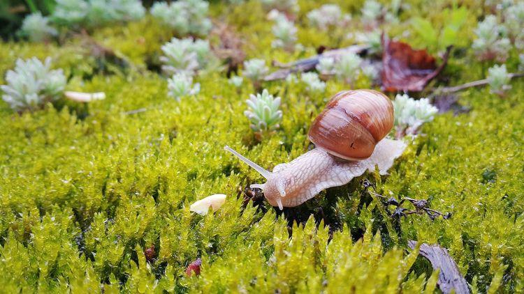 Taking Photos Snails Pace Snail🐌 Macro Photography Mobile Photography Popular Photos Nature Photography Nature_collection Snailfriend Mobile Artist