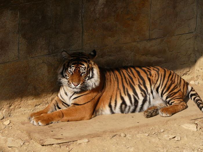 Cat sitting in a zoo