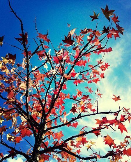 Autumn Autumn Leaves Fall Leaves Leaves