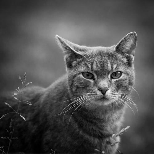 Cat Carlo