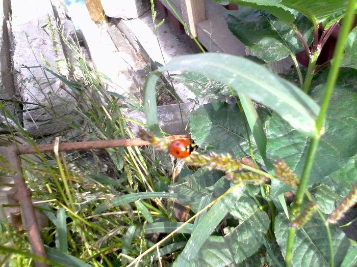Ladybeetle Unedited Ladybug Green Plants Grass Wolfzuachis Eyeem Market